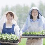 農業支援外国人受入事業とは